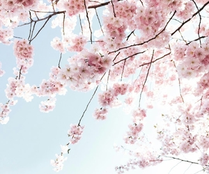 blossom, pink, and spring image