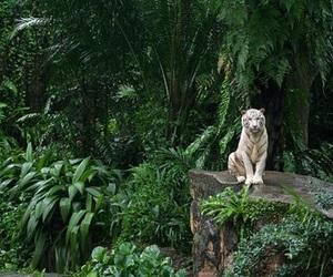 tiger, green, and jungle image