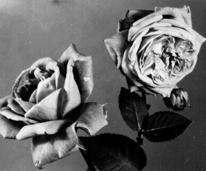 b&w, dark, and flowers image