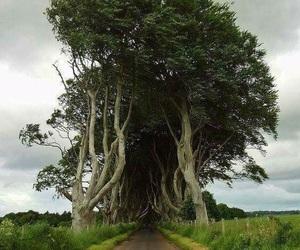 ireland, tree, and wallpaper image