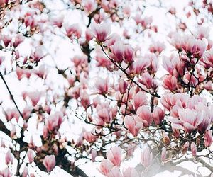 flowers, magnolia, and trees image