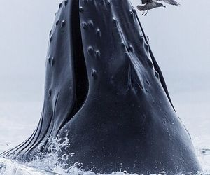whale, nature, and sea image