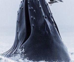 whale, sea, and animal image