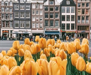 city, flowers, and tulips image