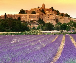 beautiful, france, and flowers image