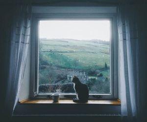 cat, window, and coffee image