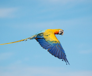 birds, macaw, and parrot image