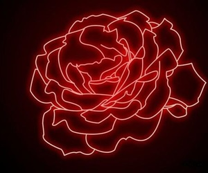 rose, red, and light image