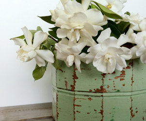 container, mint green, and new orleans image