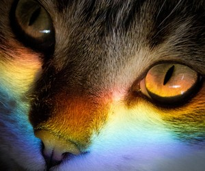 aesthetic, rainbow, and cat image
