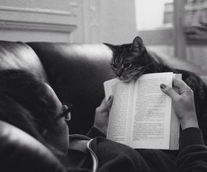 books and cats image