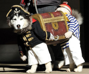 dog, funny, and pirate image