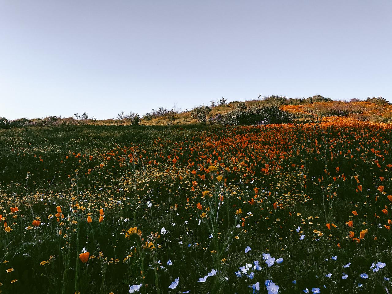 Field Of Wildflowers Tumblr