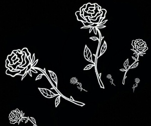 roses, black, and white image