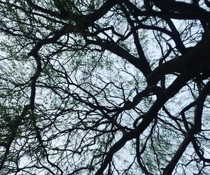 adventures, silhouette, and tree image