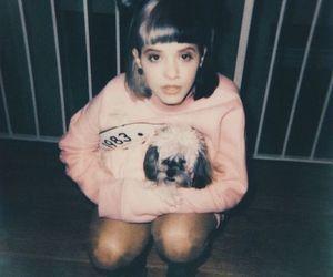 cry baby, dog, and polaroid image