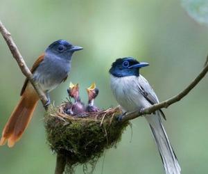 nest, birds, and baby birds image