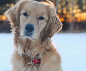 golden and winter image