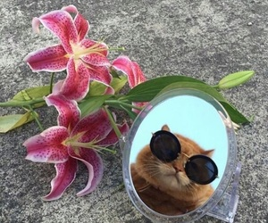 cat, flowers, and mirror image