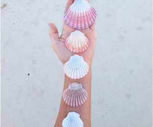 beach, summer, and shell image