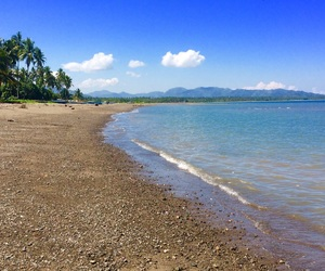 blue sea, palm trees, and sea breeze image