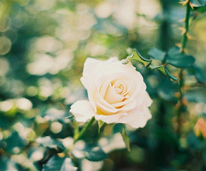 flowers, roses, and green image