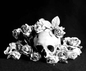 skull, black and white, and rose image