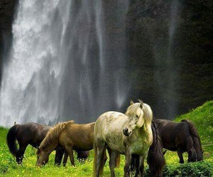 horse, pony, and nature image