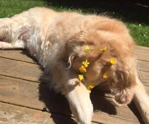 dog, animal, and yellow image