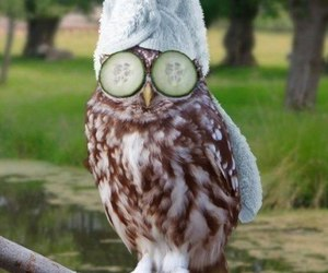 lol and owl image