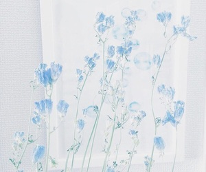 blue, white, and flowers image