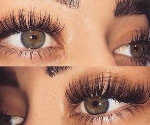 animals, eye, and eyebrows image