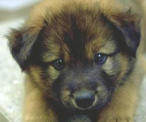 cute dogs, cute, and dog image
