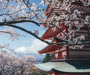 architecture, asia, and blossom image