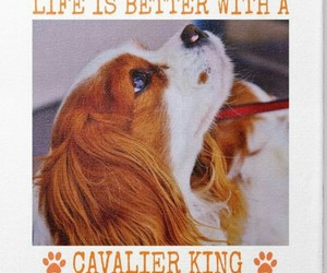 dogs and cavalier king charles spaniel image