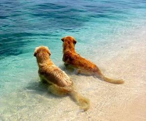 dog, beach, and sea image