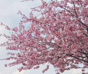 blossom, cherry, and happy image