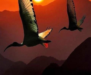 birds, sunset, and nature image