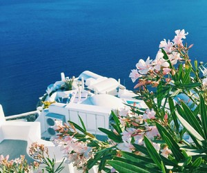 flowers and santorini image