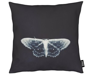 blue, butterfly, and pillow image