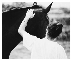 horse, inspiring, and riding image