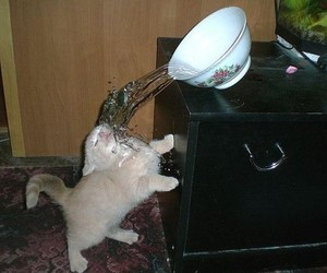 cat, funny, and water image