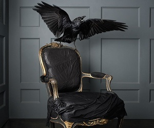 black, chair, and crow image