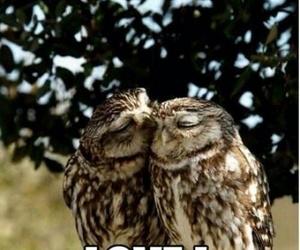 love, animal, and owl image