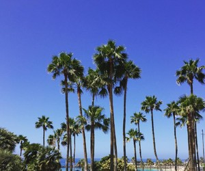happiness, palms, and paradise image