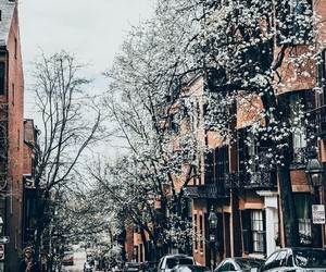 aesthetic, architecture, and boston image