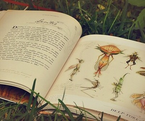 book and fairy image