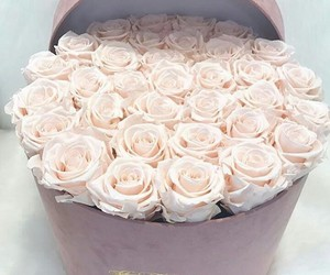 beautiful, elegant, and roses image