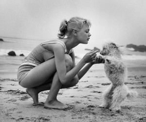 beach, dog, and black and white image