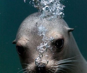 seal and bubbles image